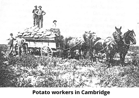 Potato Workers in Cambridge