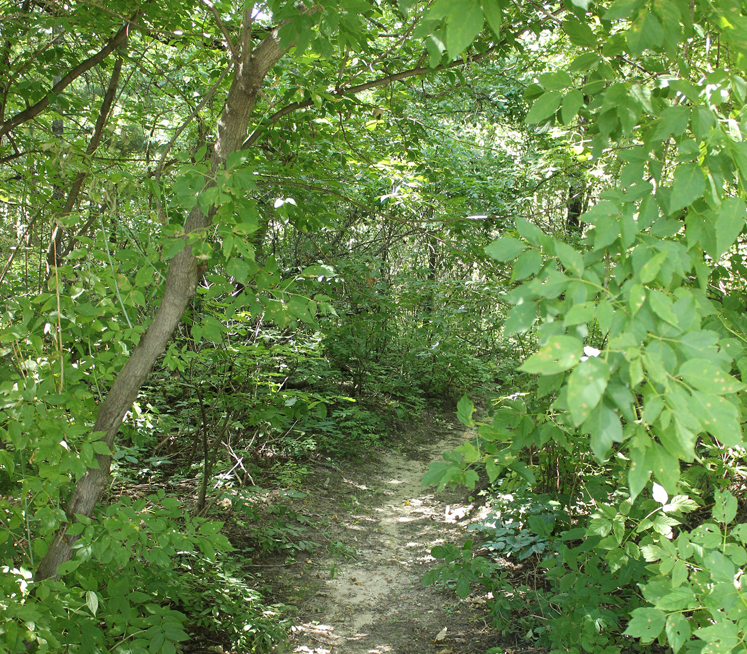 Wood Duck Park - Wooded Trail